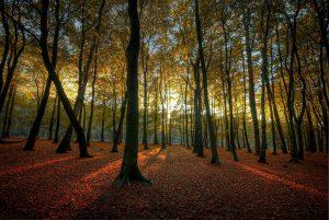 1280px-Hopwas_Woods_Sun