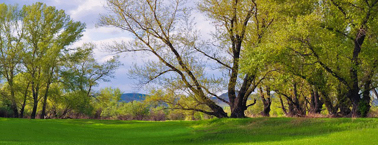 Green meadow and trees